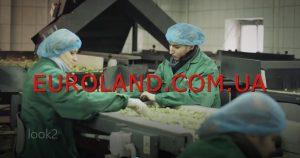 Работа в Польше сортировка овощей