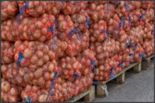 Бесплатные вакансии в Польше -переработка лука